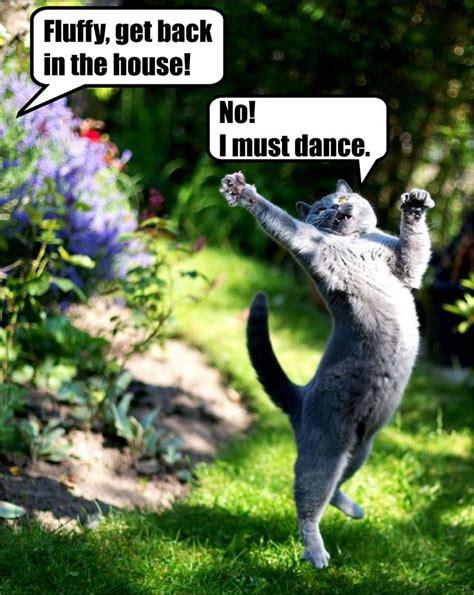 Dancing Cat Meme - i must dance meme cat lolcat animal memes pinterest cats dance pictures and love