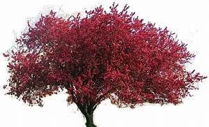 Red Tree Clipart