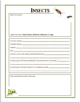 benefits of insects and free insect worksheet insects pinterest homeschool worksheets and