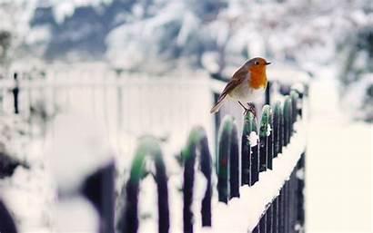 Winter Snow Bird Birds Fence Wallpapers Desktop