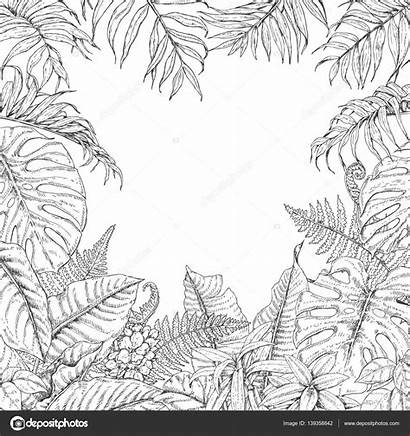 Tropical Plants Coloring Plant Drawing Frame Monstera