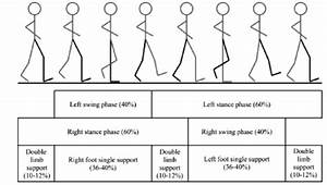 1  The Human Gait Cycle And Its Phases  33