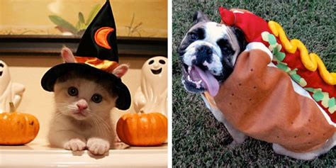 15 Year Old Boy Bedroom Ideas by Best Pet Halloween Costumes For Dogs Amp Cats 2016 Cute