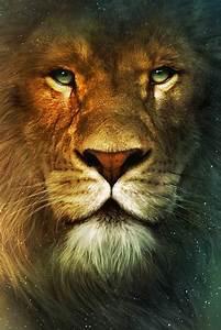 Photos Le Monde De Narnia Chapitre 1 Le Lion La