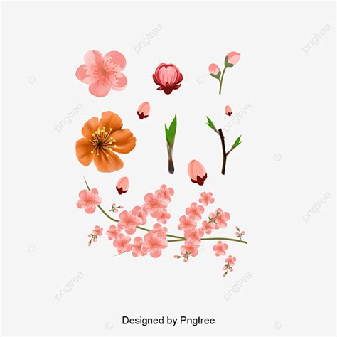 Pink Peach Vector Pink Peach Blossom Flower PNG