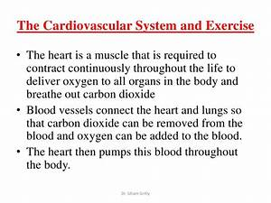 Circulatory System Essay creative writing satire 11+ english creative writing shs creative writing dll