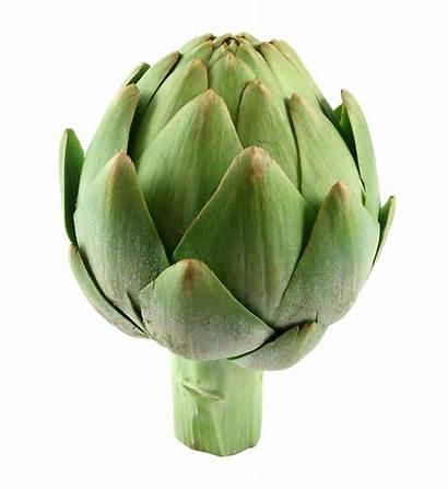 Artichoke Vegetables Artichokes Fresh Mediterranean Vegetable Transparent