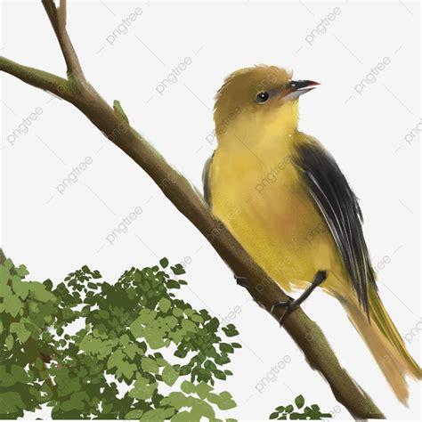 paling populer 21 gambar kartun burung di atas pohon