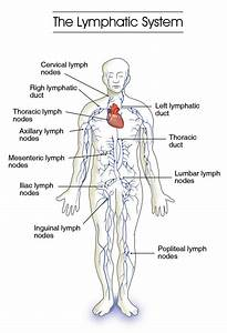 The Forgotten Detox System   Lymphatic System