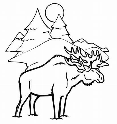 Coloring Winter Animal Moose Animals Drawing Head