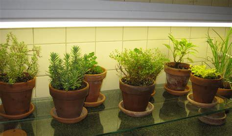 ideas  kitchen herb garden  home