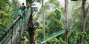 Borneo Eco Tours | Danum Valley