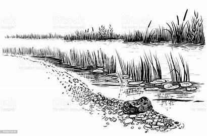 River Landscape Vector Cattail Reed Illustration Silhouette
