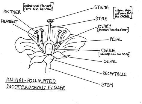 Diagram Of Water Flower by Diagram Gallery