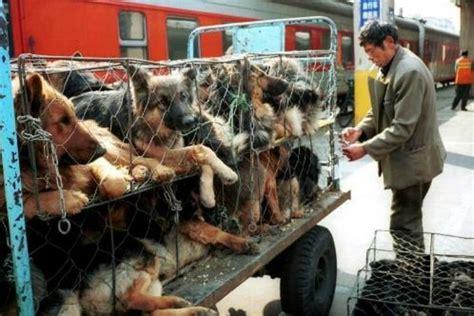 festival chino mata miles de perros  comer hoyestadocom