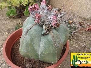 Cactus Sans Epine : cactus mediterraneens rustiques ~ Melissatoandfro.com Idées de Décoration