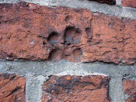 zobacz wątek stare cegły w ogrodzie