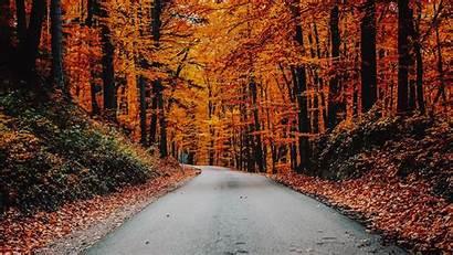 Autumn Road Foliage Background Asphalt Turn 1080p