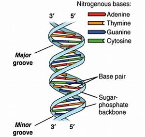 How Is Dna Sequenced