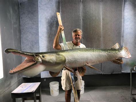 gar alligator mount taxidermy fish replica mounts america