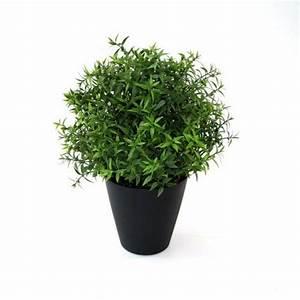 Eucalyptus En Pot : eucalyptus 35cm in pot ~ Melissatoandfro.com Idées de Décoration