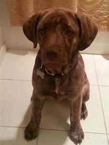 Meet Xena our Boxer-Rottweiler mix puppy | Lexis treats ...