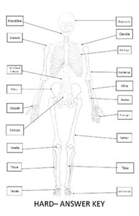 skeletal system worksheet 11x17 label bones of the skeleton by alexis forgit