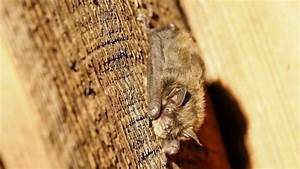 Little brown bat colony discovery a 'glimmer of hope' for ...