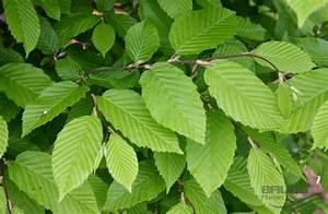 Verpiss Dich Pflanze : verpiss dich pflanze kaufen verpiss dich pflanze dehner 39 verpiss dich pflanze 39 buntes laub ~ Orissabook.com Haus und Dekorationen
