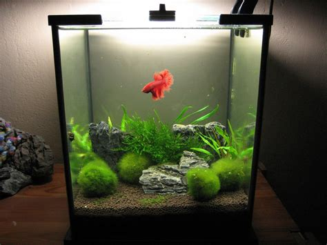 5 liter aquarium my aquarium scapes 20 liters nano cube
