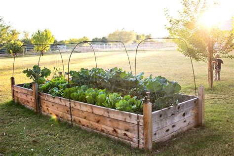 raised garden bed design ideas including beds pictures