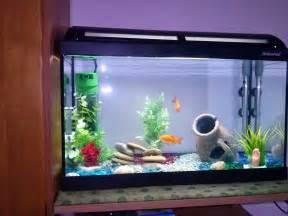 Barabao come allestire un acquario per pesci rossi