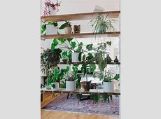 643 best home interiors with plants images on Pinterest