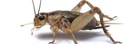 nourriture de survie les insectes