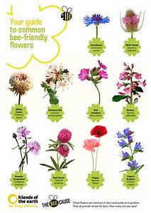 Your Guide To Common Bee