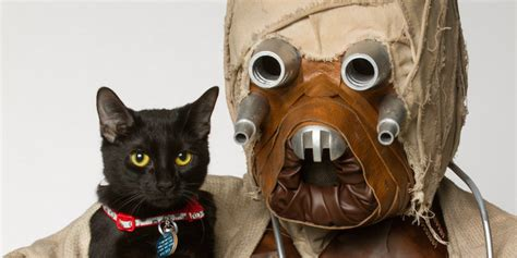 star wars characters join forces  adorable animals