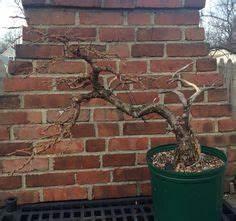 Die Schönsten Gartenbäume : pin von inola auf bonsais pinterest ~ Michelbontemps.com Haus und Dekorationen