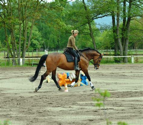 Arthrose Beim Pferd Behandeln