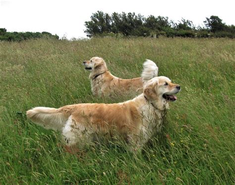 dog friendly dittiscombe dittiscombe holiday cottages