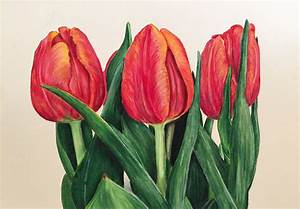 Prismacolor Colored Pencil: Tulip Speed Drawing - YouTube