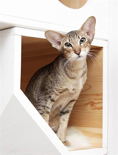 catissa cat tree   cats   private