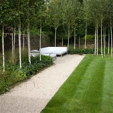 small trees for the garden amazing small garden trees design nice trees for garden dwarf trees for front of house best