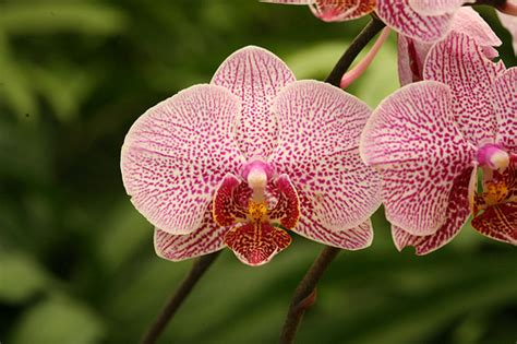 types of orchids types of orchids everything orchids