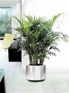 Marc De Café Plantes D Intérieur : grosse plante verte d int rieur photos de magnolisafleur ~ Melissatoandfro.com Idées de Décoration