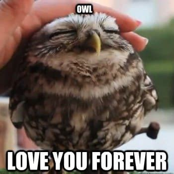 White Owl Meme - i love u meme funny memes about love