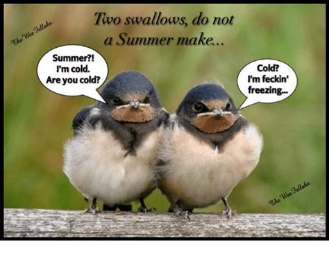 Two Swallows Do Not A Summer Make Summer?! I'm Cold Are