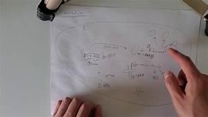Ap Biology  Translation  Mrna Instructions Followed To