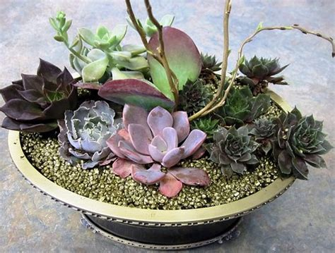 succulent dish garden how to make a succulent dish garden step by step
