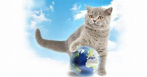 Smallest Cat In The World Guinness Book Of Record   www ...