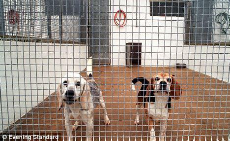 quarantine  boost  owners  pets